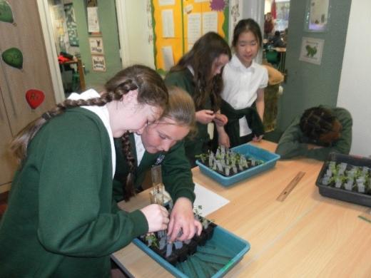 Children planting Rocket seeds